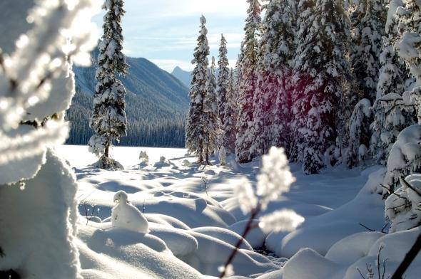 Winter Flare