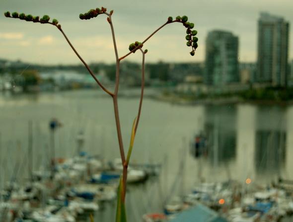 Taken at False Creek in Vancouver, British Columbia.